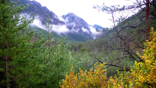 mountain woods forest rain spring catalonia europe