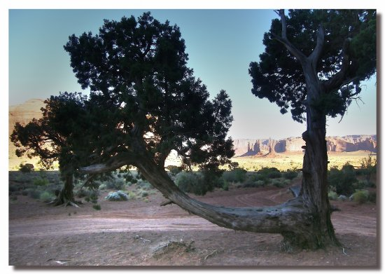 usa arizona monumentvalley tree funnytreesclub usax arizx monux treex