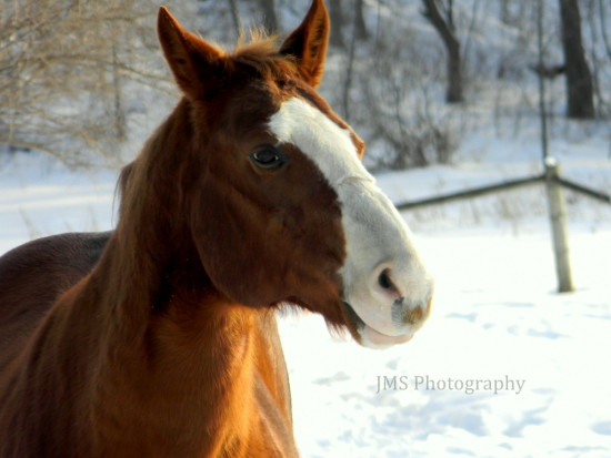 Maple Grove MN Farm Horses