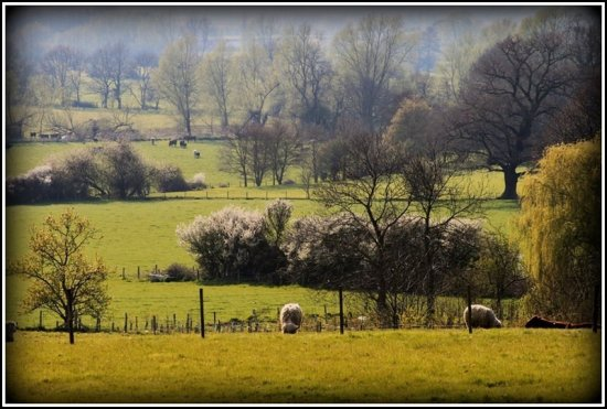 My Local Countryside