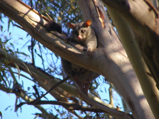 Possum Magic I know its daylight but Ive got my eye on you