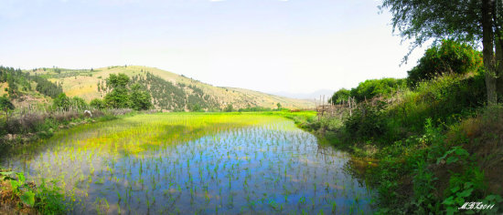 iran nature dorfak rice field panorama