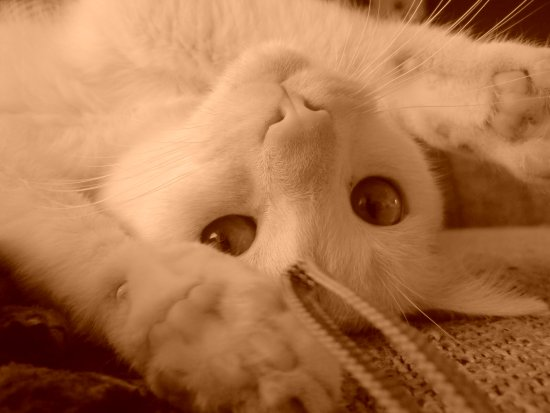White Cat Sepia