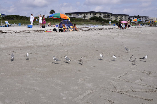 sunshinestate cocoa beach florida bathers birds