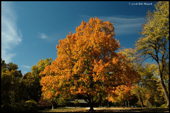 stlouis missouri us usa landscape fall tree sky blue rust 2007