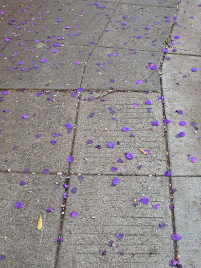 purple purplefph pavement flower petals