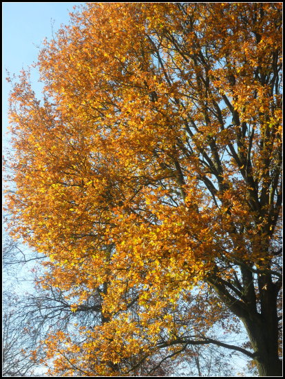 trees autumn yellow
