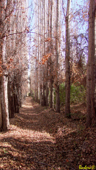 Arboles y caminos del invierno