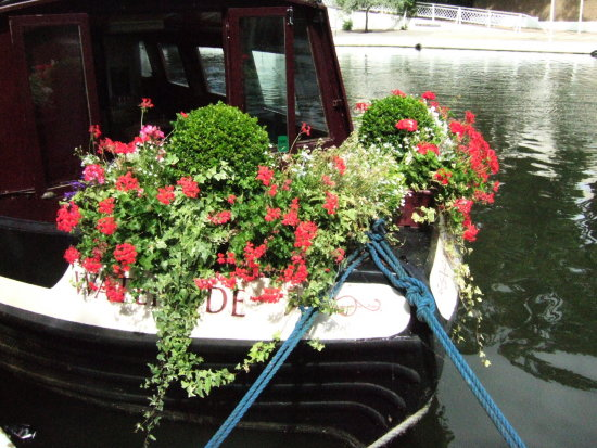 flowers canal london narrowboat canalclub
