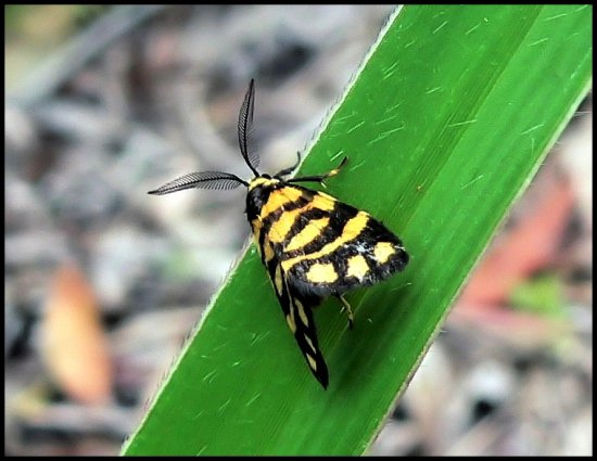 insectfriday moth