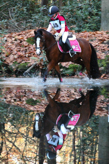 horses eventing