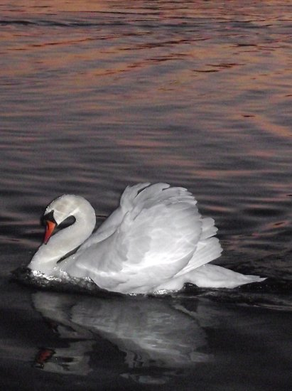 swan colwick saffi9 reflectionthursday