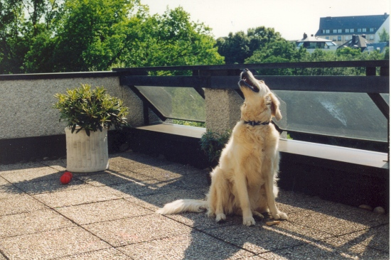 My dog on the terrace