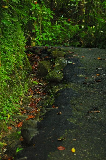 path trail jungle leaves nature green moss