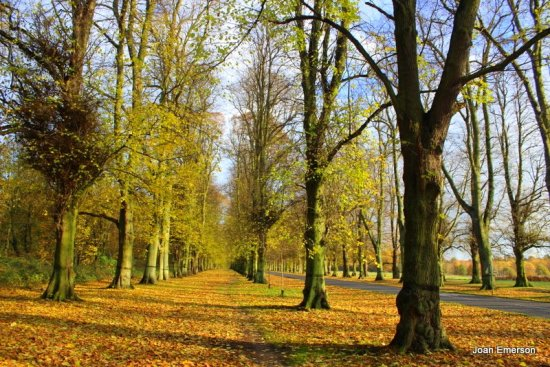 Lime grove Clumber park