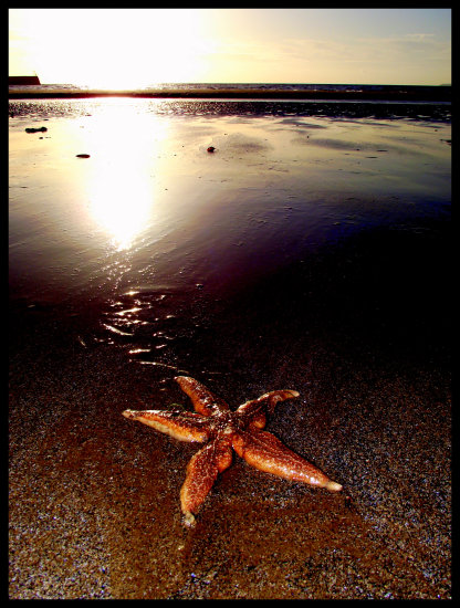 starfish sunrise saffi9