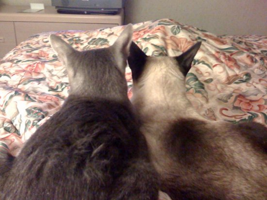"""We just love to watch TV......""