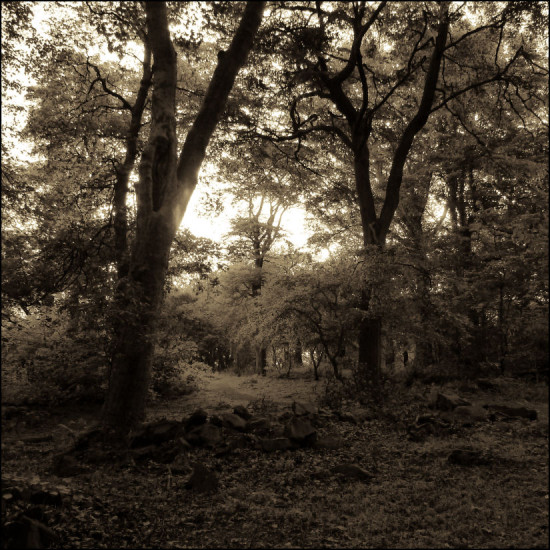 Edinburgh Woodland