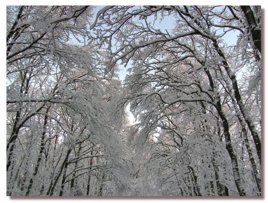 netherlands bussum snow winter tree nethx bussx snowx wintx treex