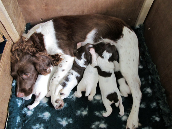 Puppies!!! We went to see my daughter and her menagerie today