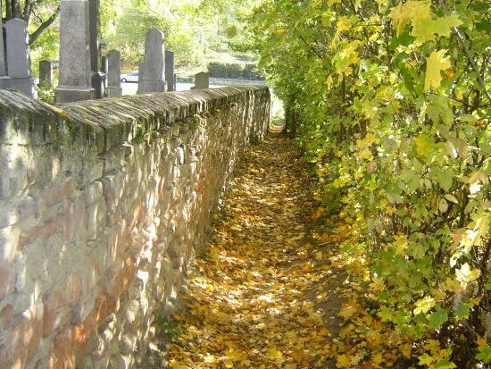 Autumny alley leafs czech wall centementary