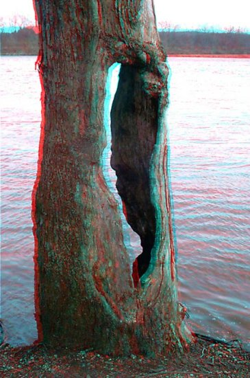 Anaglyph 3D Stereo nature tree river