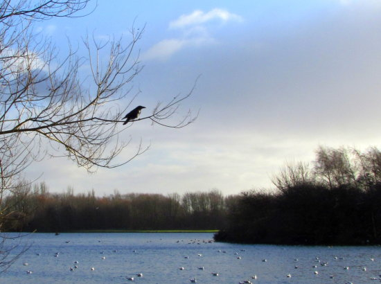 The lake at Colwick.