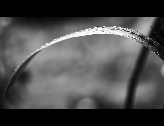 Raindrops June 2012