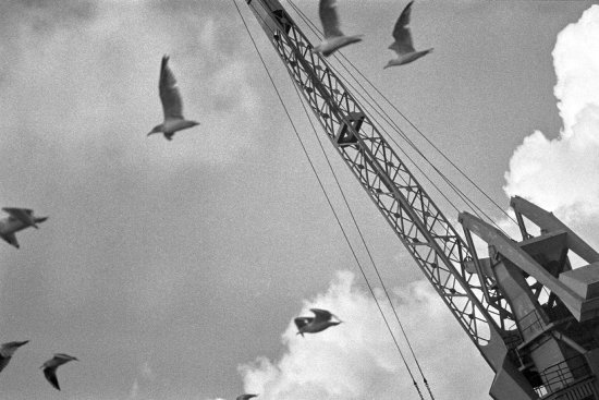 seagulls with crane