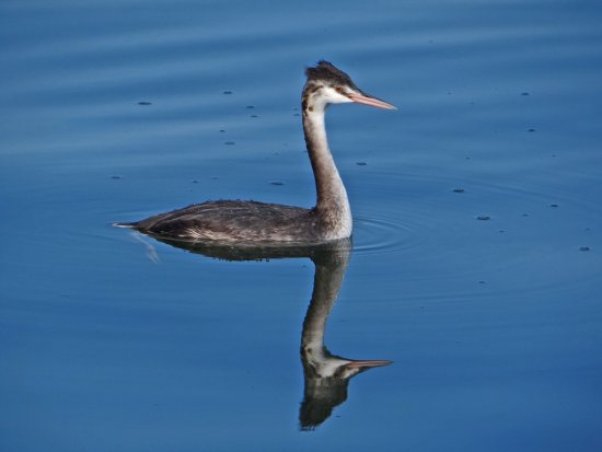 reflectionthursday bird