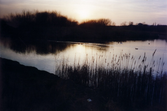 South Norwood Park Lake Side Dusk View Nature
