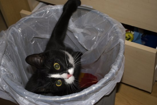 cat trashcan garbage