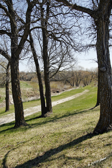 landscape trees riverbank lowerfortgarry manitoba canada