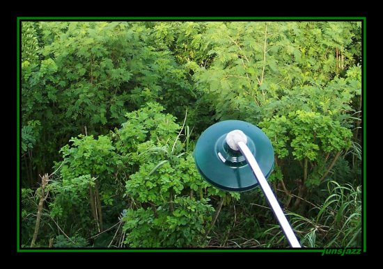 philippines lightpost foliage green