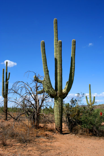 arizona usa travel cactus plant scenery landscape nature