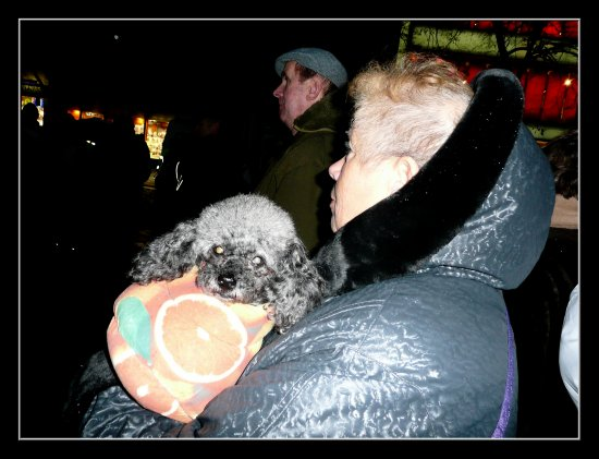 people meeting dog anniversary Velvet revolution Prague Czechrepublic
