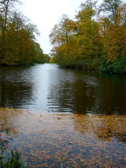 netherlands groeneveld water tree autumn nethx groex waten treex autux