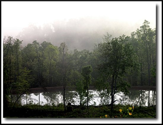 reflectionthursday pond fog