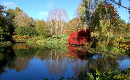 reflectionthursday rosemoor devon