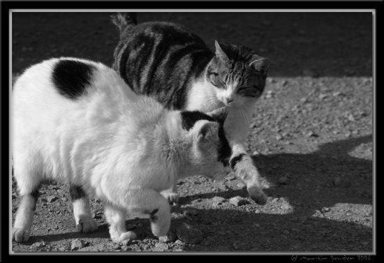 cats playing playful tarbert co kerry limerick ireland martin