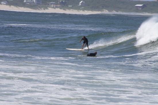vacationafrica st francis bay waves