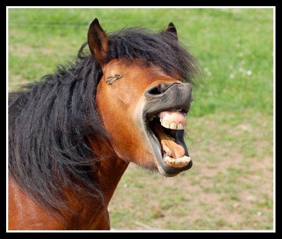 horse animal laugh somerset somersetdreams