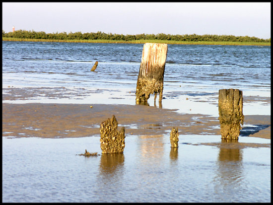 channel aransaspass portaransas causeway pilings