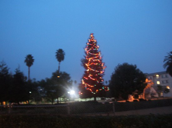 palm trees and christmas tree??? weird and cool =)
