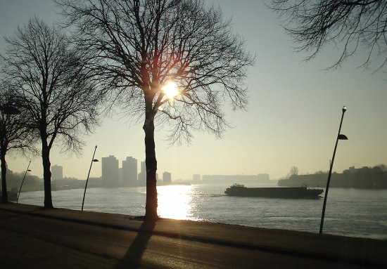 Subtropical Rotterdam Yesterday