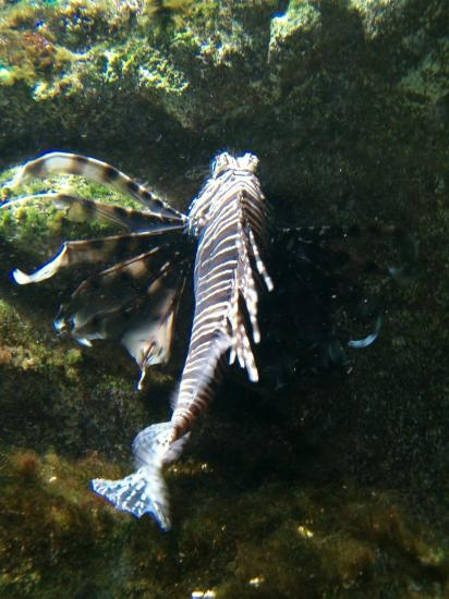 nature animals fish