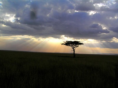 beatiful sunset at the nairobi game park in the rift valley