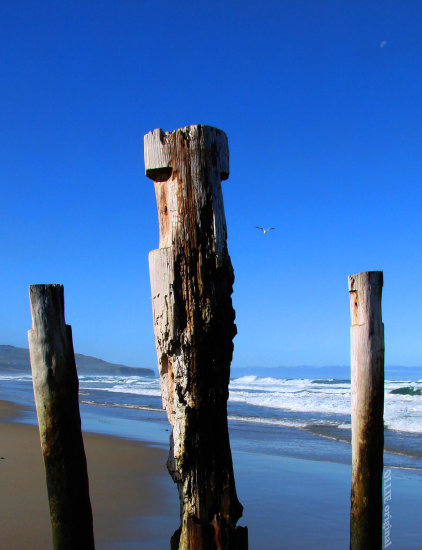 TrioFriday St Clair Beach Dunedin New Zealand littleollie