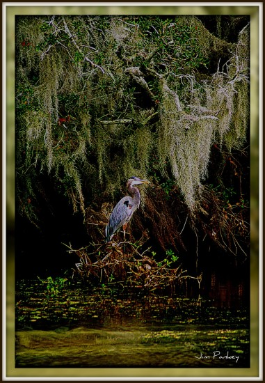 Heron Swamp Louisiana Bird Wildlife Bayou Art reflectionthursday