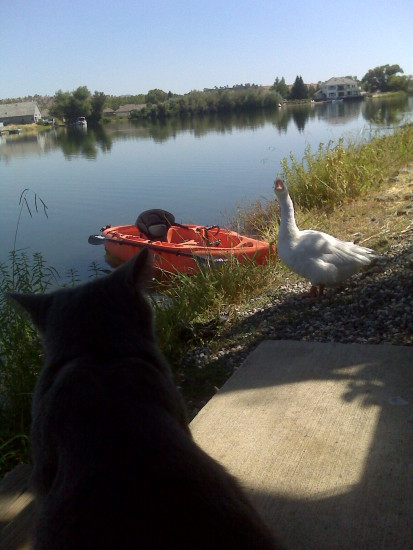smokey and the goose